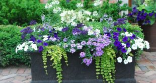 Beautiful Container Gardening Flowers 200