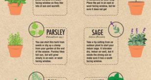 DIY Mason Jar Herb Garden Ideas