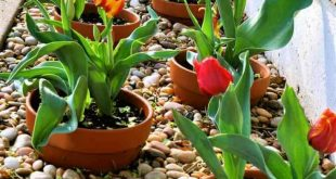 Easy-to-Update Potted Border, add potted annuals with each season around your pe...