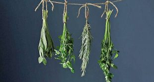 How To Harvest and Preserve Herbs