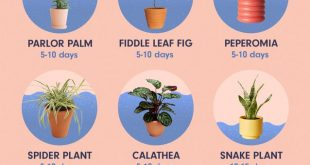 How to Water the 15 Most Popular Houseplants