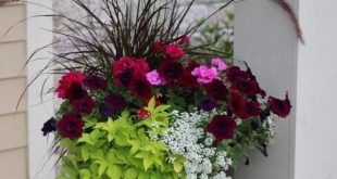 Ideas from 20 planters from my neighborhood
