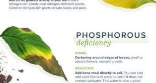 Troubleshoot Plant Problems & Deficiencies