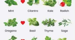 what herbs grow well together? - companion planting herbs