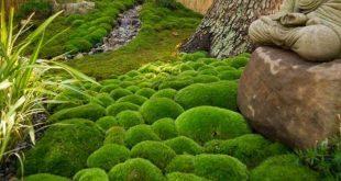 Ideen für die Dekoration eines schönen Gartens mit Stein und Moos