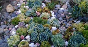 Saftiges Gartendesign ist ein wachsender Trend, der immer beliebter wird und