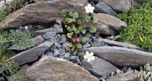 68+ Marvelous Rock Garden Ideas Backyard Front Yard 68+ Wunderbare Steingarten I...