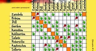 Der ultimative Pflanzplan für euer Gemüse! Viele Gemüsesorten vertragen besti...