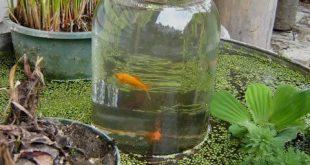 Diy: Fisch-Aufzug mit einem Glas