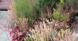 Farbe #farbe #ornamentalplant – #farbe #ornamentalplant