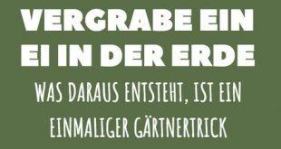 Jeder mit einem grünen Daumen weiß: Beim Gärtnern ist gute Erde für die Pfla...