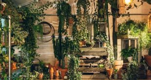 Natural And Beautiful Indoor Jungle Ideas That Will Enhance Your Room: 25+ Awesome Ideas