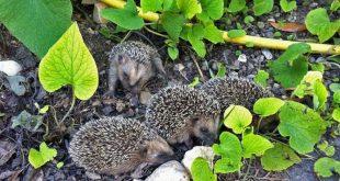 Naturschutz im Garten: Was im Juli wichtig ist