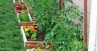Our Suburban Garden