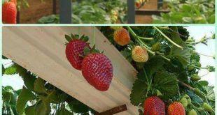10 Platzsparende Erdbeergarten-Pflanzgefäße Ideen #erdbeergarten #ideen #pflan...