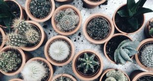 25+ Beautiful Cactus Aesthetic Ideas The older leaves have been observed at the ...