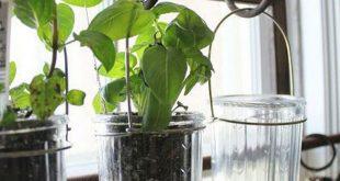 25+ Creative Ways to Make Your Indoor Herb Garden Today
