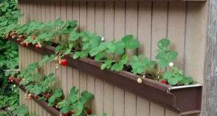40 Stunning Vegetable Garden Design Ideas Perfect For Beginners (38