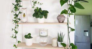 42 Erstaunliche Indoor-Gartendekorationen Tipps und Ideen #erstaunliche #garten...