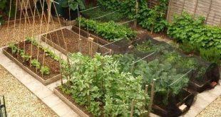 80 erschwingliche Hinterhof-Gemüsegarten-Design-Ideen