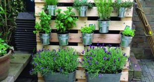 Charlie McCormick's tips for planting a balcony garden