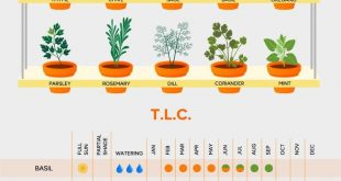 Create A Garden To Remember With This Useful Advice