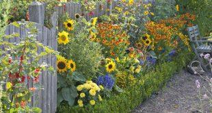 Die wichtigsten Pflanzen für den Bauerngarten