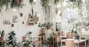 Growing birds indoors can make your home look operational and lavish and if you ...