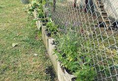 Hühnerkräutergarten - NZ Ecochick #ecochick #huhnerkrautergarten