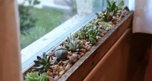 I'm loving the newest addition to our indoor gardens: windowsill succulents....