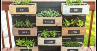 Shoots, Sprouts And Stems: Gardening Advice And Ideas
