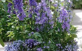 Was für eine großartige Idee für einen süßen Gartenpflanzer! Holen Sie sich